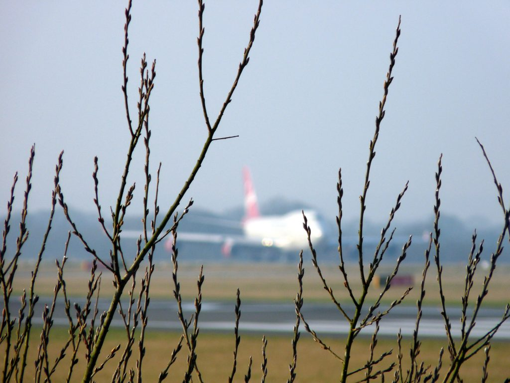 A plane is in the background on a runway at Manchester airport, with some foliage in focus in the foreground